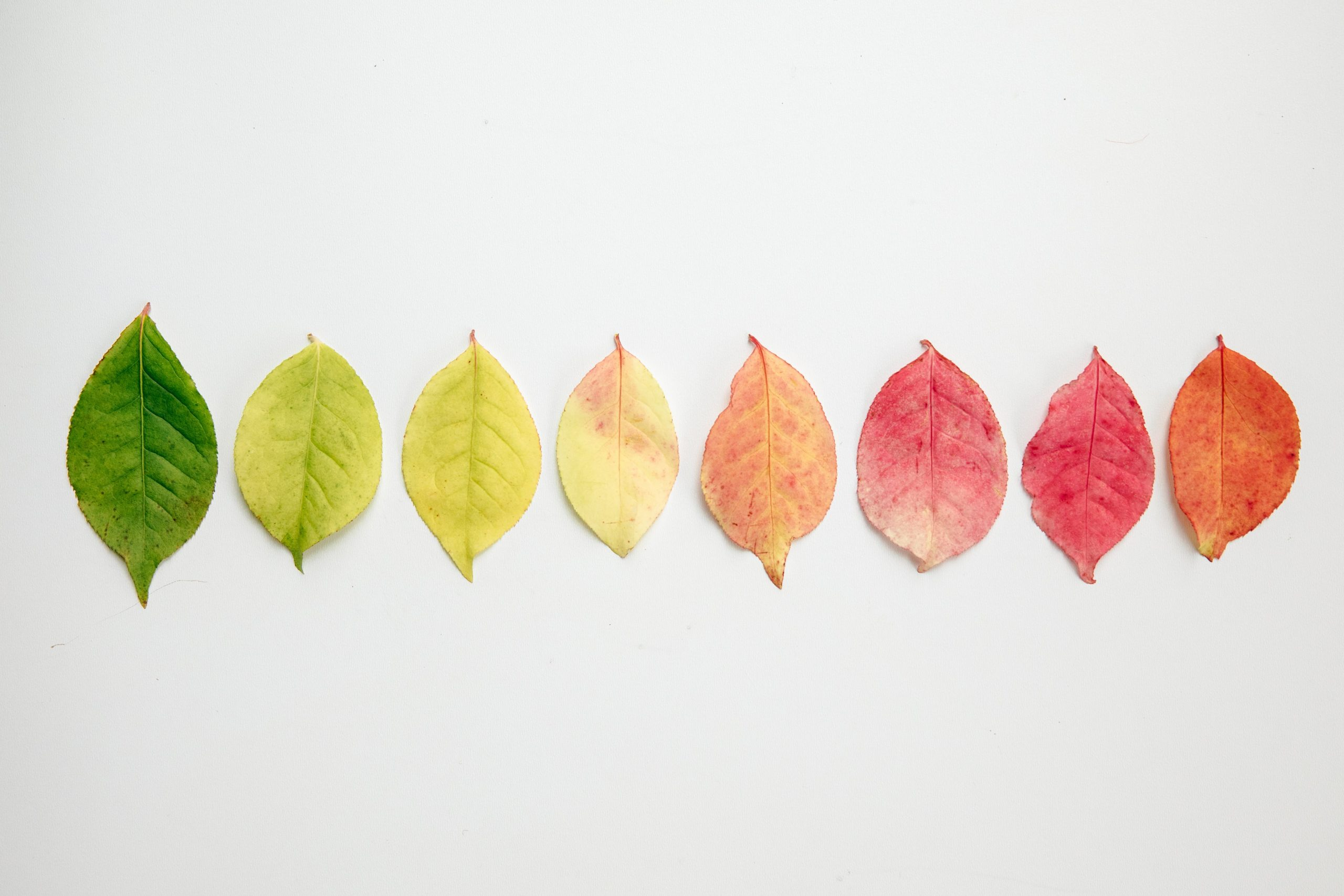 Leaves of change.